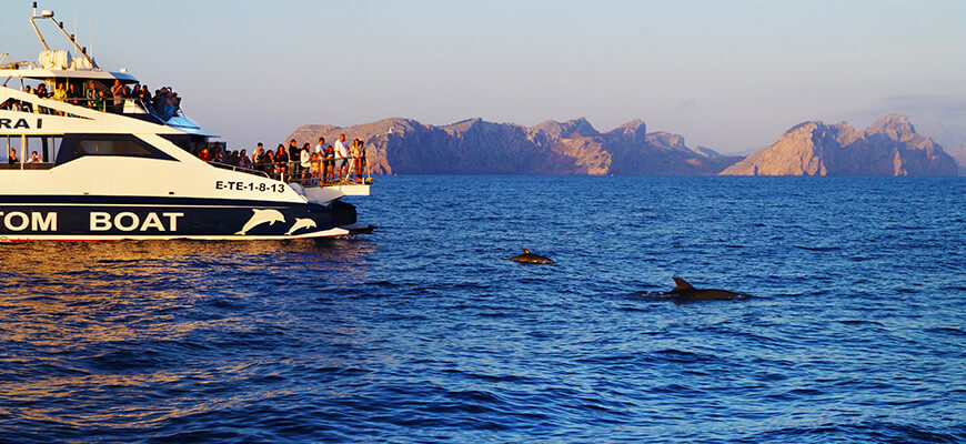 dolphin watching tour mallorca